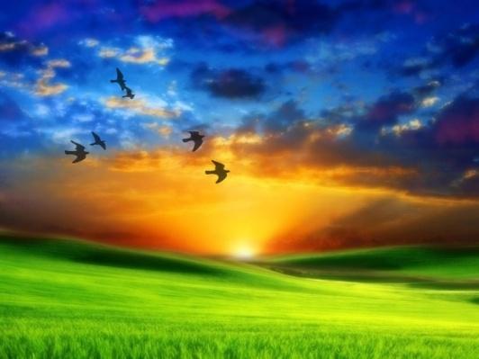 http://emocionesparaelcoaching.files.wordpress.com/2010/03/amanecer-paraiso1.jpg